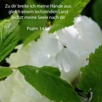 Zu dir breite ich meine Hände aus; gleich einem lechzenden Land lechzt meine Seele nach dir ( Psalm 143,6 )