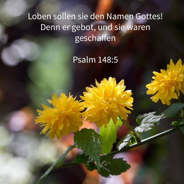Loben sollen sie den Namen Gottes! Denn er gebot, und sie waren geschaffen ( Psalm 148,5 )