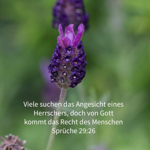 Viele suchen das Angesicht eines Herrschers, doch von Gott kommt das Recht des Menschen ( Sprüche 29,26 )