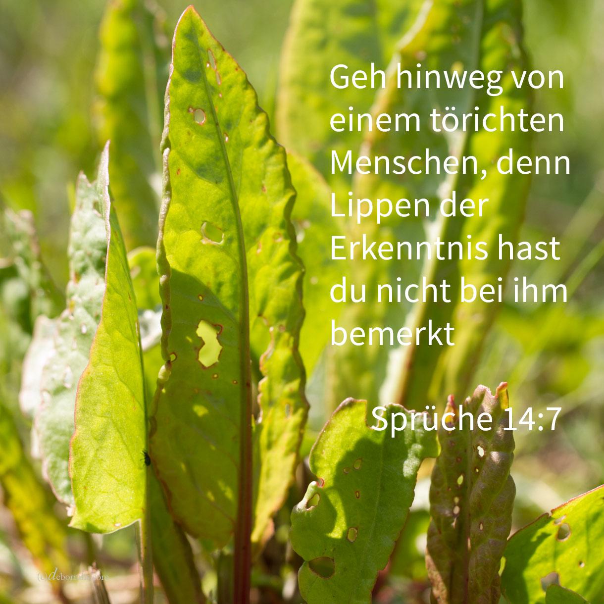 Geh hinweg von einem törichten Menschen, denn Lippen der Erkenntnis hast du nicht bei ihm bemerkt ( Sprüche 14,7 )