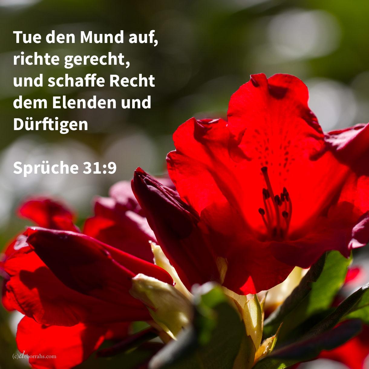 Tue den Mund auf, richte gerecht, und schaffe Recht dem Elenden und dem Dürftigen ( Sprüche 31,9 )
