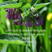 Lobet Gott in seinem Heiligtum; lobet ihn in der Feste seiner Stärke ( Psalm 150,1 )