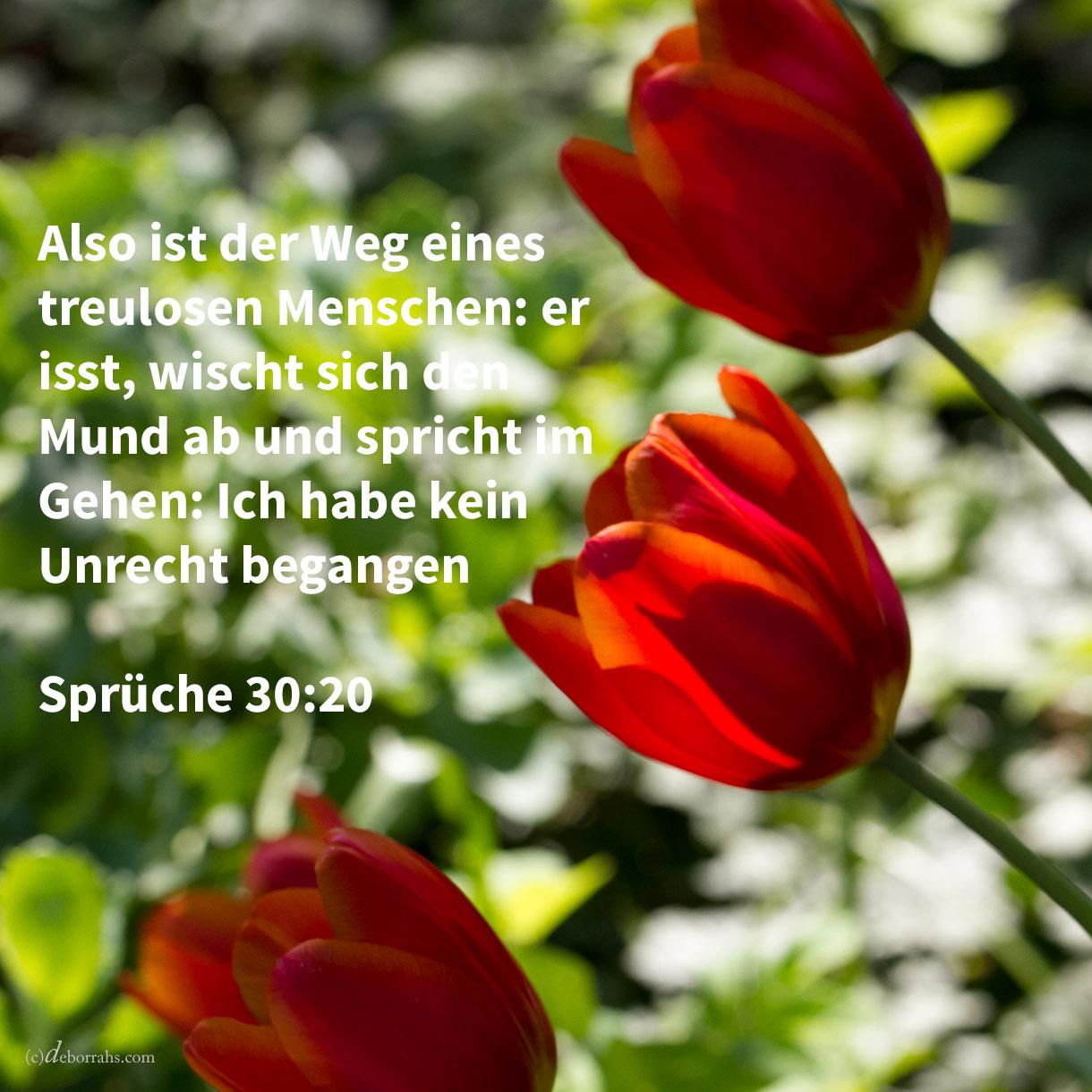Also ist der Weg eines ehebrecherischen Weibes: sie isst, und sicht ihren Mund und spricht: Ich habe kein Unrecht begangen ( Sprüche 30,20 )