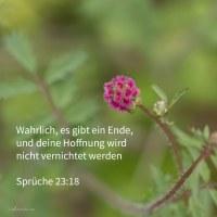 Wahrlich, es gibt ein Ende, und deine Hoffnung wird nicht vernichtet werden ( Sprüche 23,18 )
