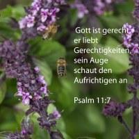 Denn gerecht ist Jehova, Gerechtigkeiten liebt er. Sein Angesicht schaut den Aufrichtigen an. ( Psalm 11,7 )