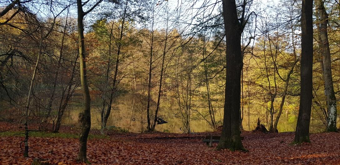 Herbstwald Spiegelung im See